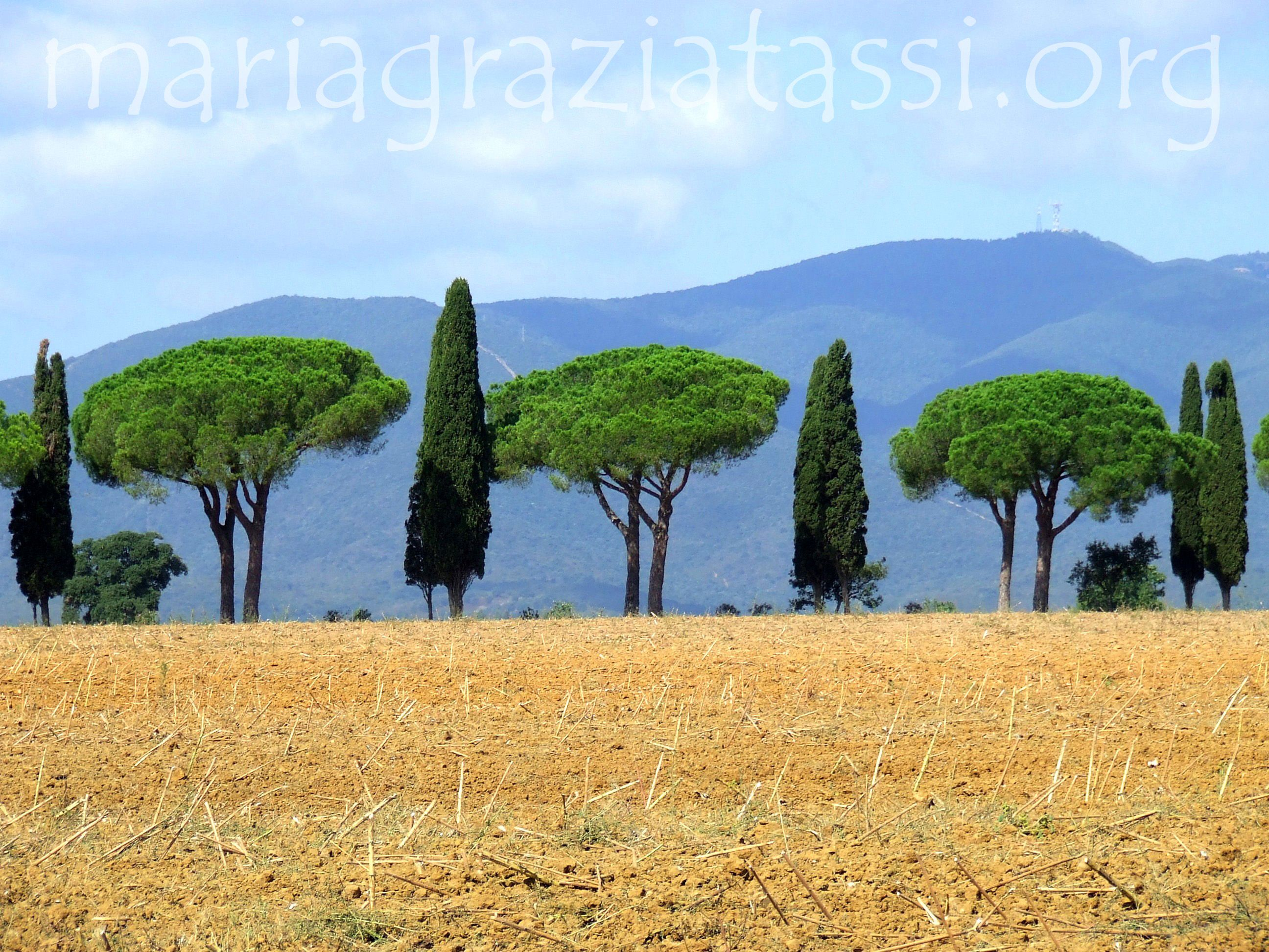 Badiola, Castiglione della Pescaia, Maremma, Tuscany, Italy.