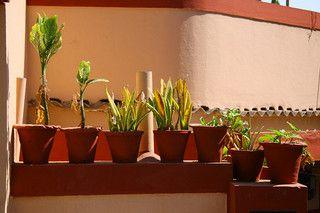 //www.vegetable-garden-guide.com/container-vegetable-gardening ... on