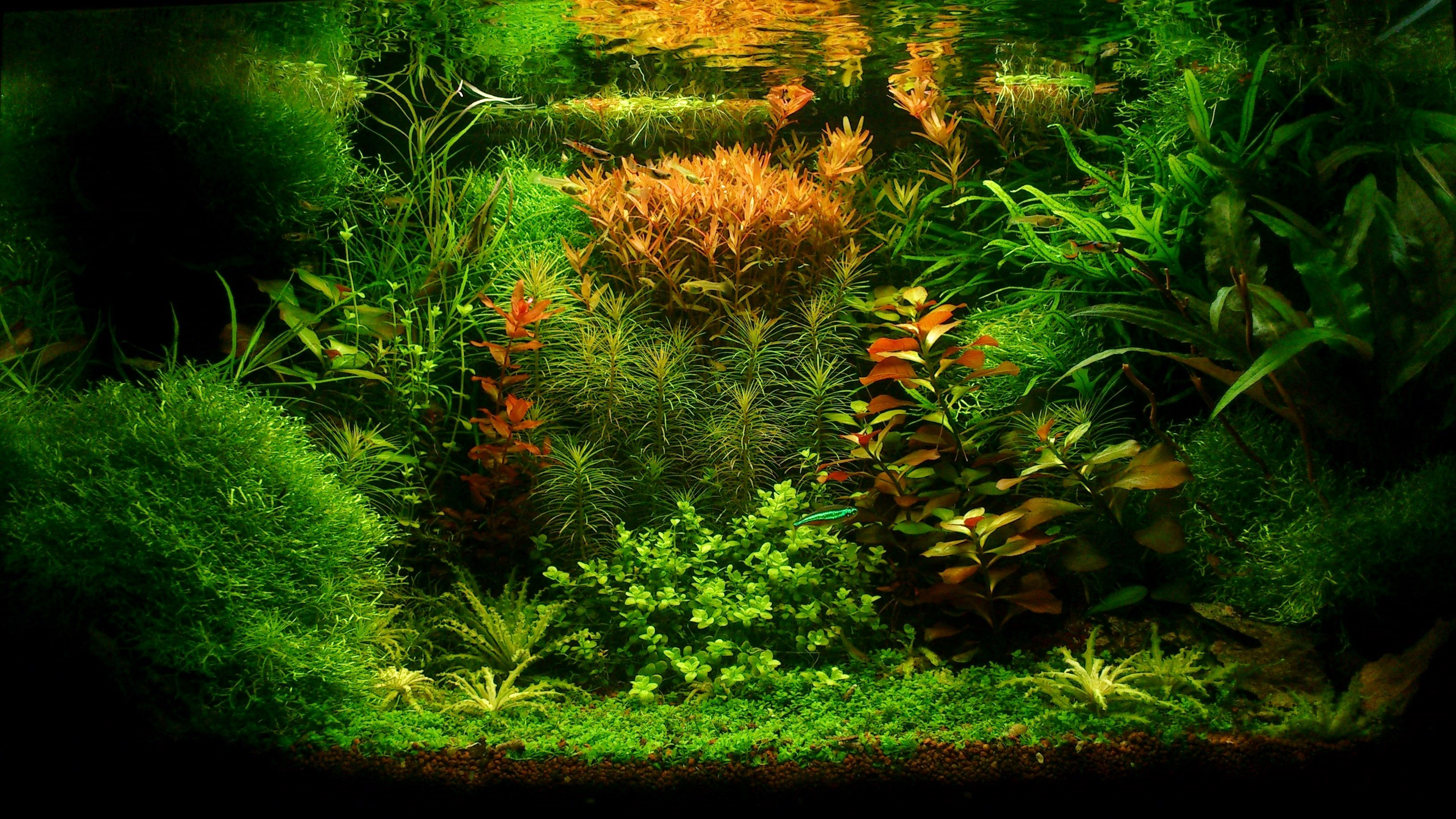 mon bac plant aquascapes aquariums pinterest. Black Bedroom Furniture Sets. Home Design Ideas