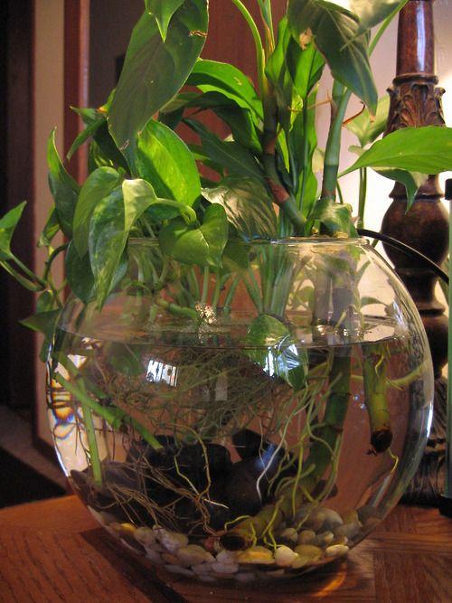 Http Plantdiaries007 Blogspot Com 2011 07 Betta Fish Bowl Html Fish Garden Indoor Water Garden Fish Plants