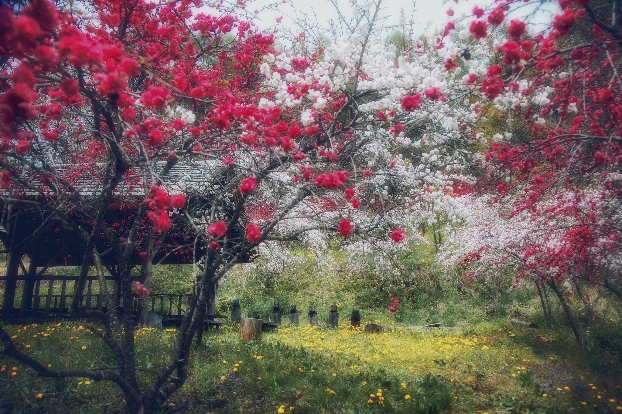 Blossom - Hanson Mao
