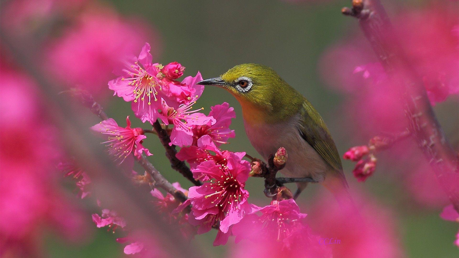 Обои цветы, птицы мира, красиво. Животные foto 7