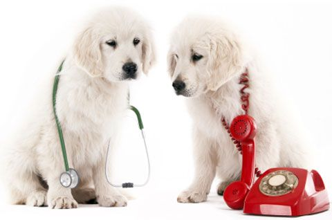 Emergency Response Petplan Pet Insurance Offers Tips For