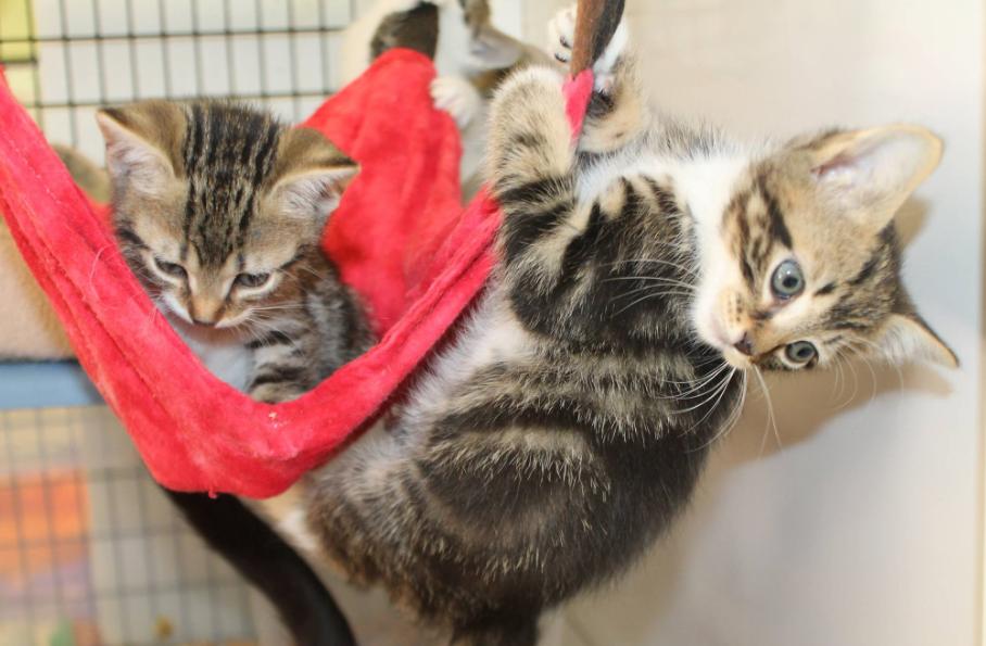 Tip of the Week Make a Kitty Hammock! ASPCA