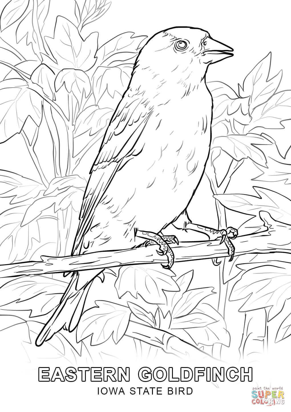 Click The Iowa State Bird Coloring Pages Bird Coloring Pages State Birds Coloring Pages