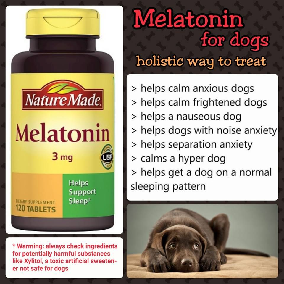 Effects Usually Last For About 8 Hours The Usual Dosage Of Melatonin For Dogs Depends On Size Dogs That Are Less T Melatonin For Dogs Meds For Dogs Hyper Dog