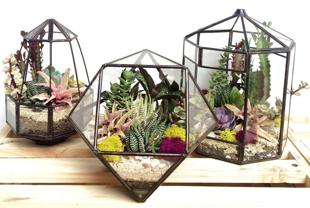 Cara Membuat Terrarium Sederhana Sendiri Blog Ruparupa Tanaman Sukulen Pot Tanam Tanaman Hijau