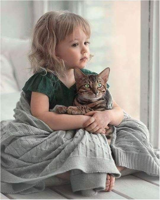 Pin by Marina Vedernikova on Animals for kids, Cats and
