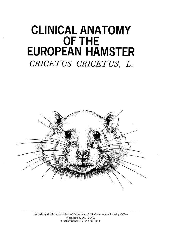 hamster anatomy - Google Search | hamster | Pinterest