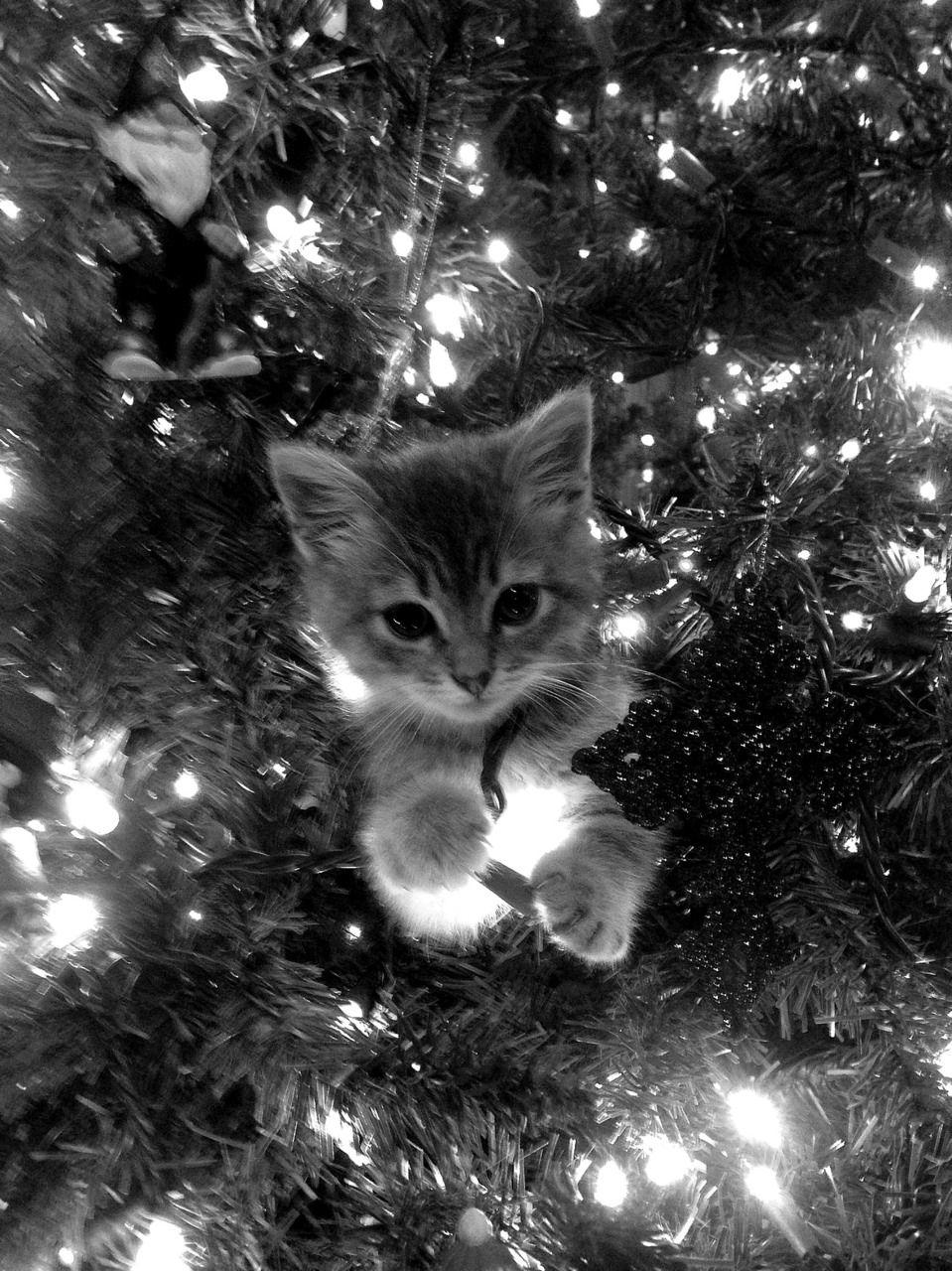 gatitos feliz navidad postales navidad arreglos adornos gatos navideos tarjetas seres vivos fotos bonitas