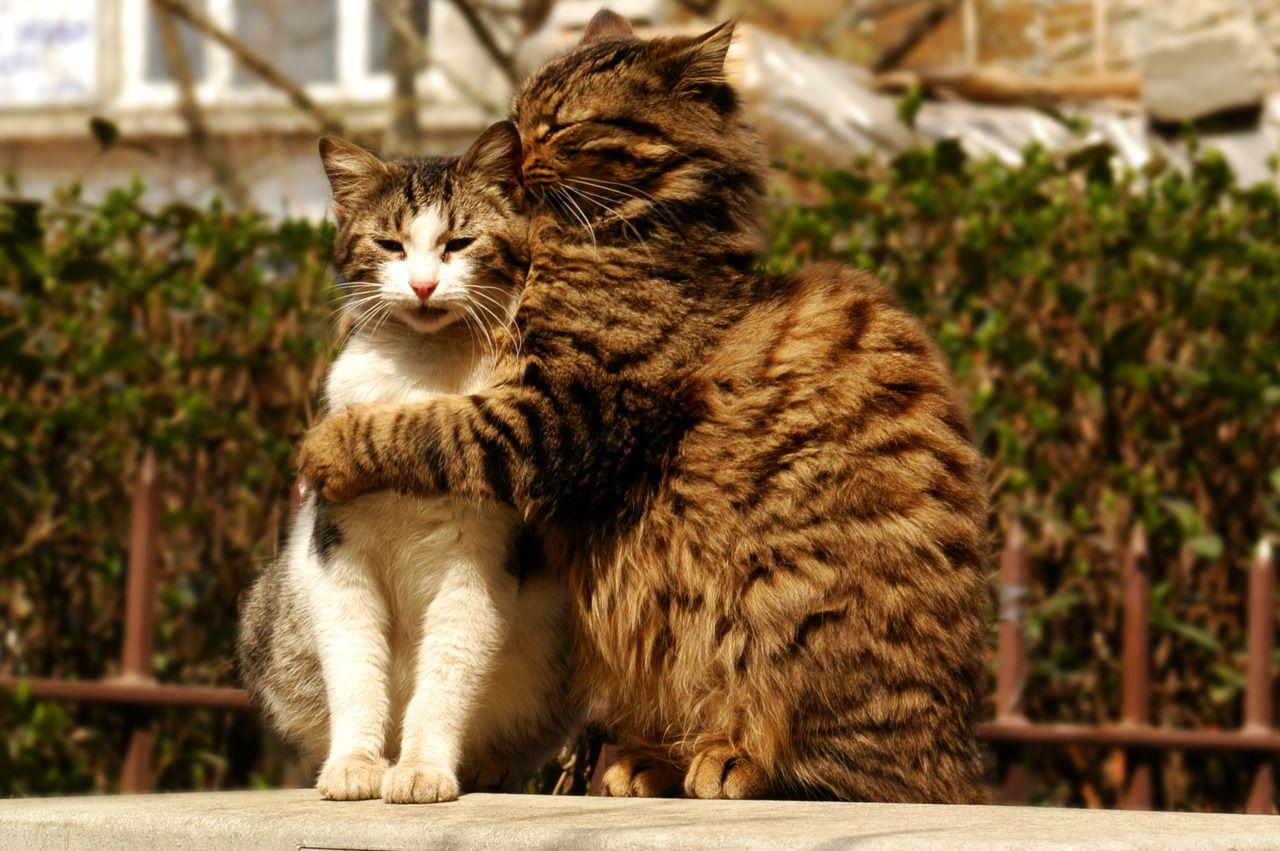 Kitty Cat Love Animals Fluffy Cats Kitten Animal Cuddling Cuddle