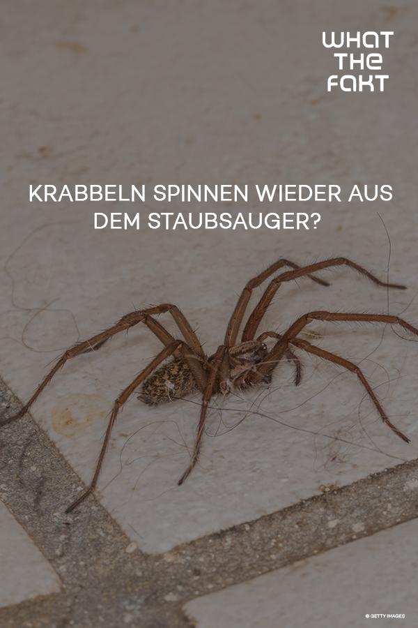 Haushalts Mythen Im Check In 2020 Staubsauger Spinne Krabbeln