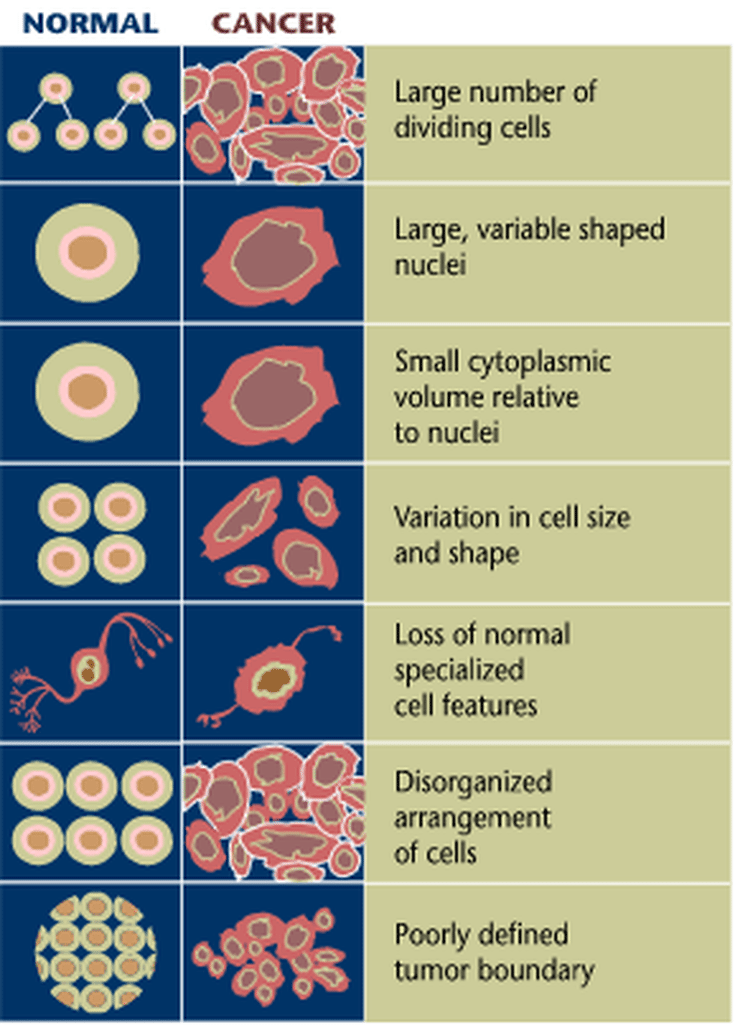 Cancer Cells Vs Normal Cells How Are They Different -8118