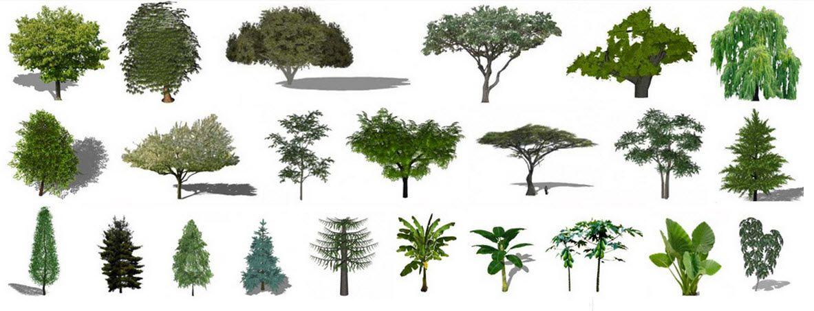 descargar gratis plantas y rboles 2d y 3d para sketchup