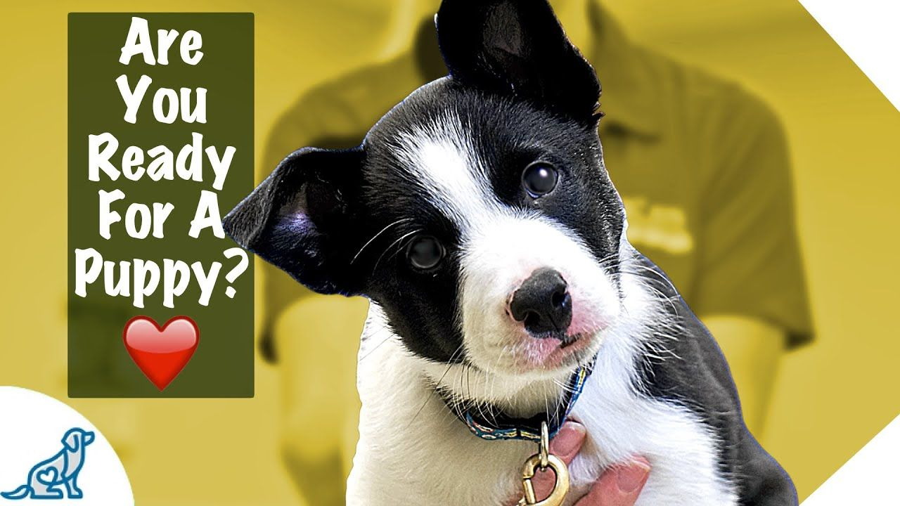 Puppy First Day Home Tips Professional Dog Training Tips