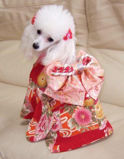Dog Costume Kimono Small Dog Clothes Puppy Costume Pet Fashion
