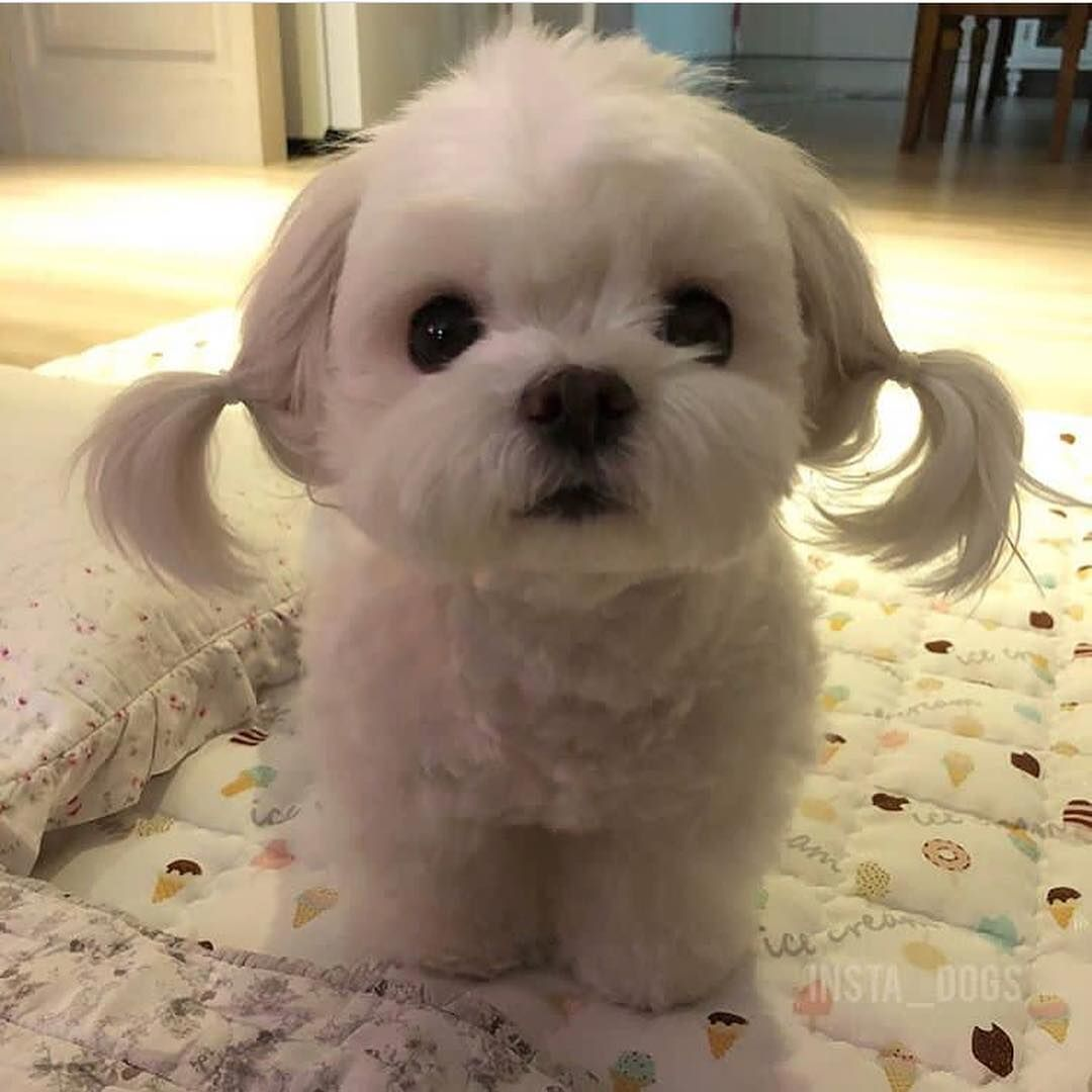 Meet Sunsim Tag Your Friends Follow Pet Addict Sun Sim Dogs Doggy Funny Animal Photos Cute Animals Cute Dogs And Puppies