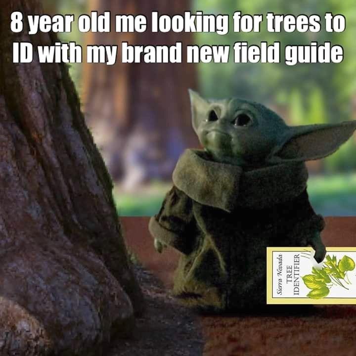 Field Guide In 2020 Yoda Meme Star Wars Humor Funny Memes