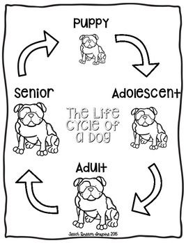 The life cycle of a dog mommy pinterest cycling primary the life cycle of a dog fandeluxe Images
