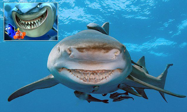 Deadly Shark Who S Always Smiling Resembles Finding Nemo Character Shark Always Smile Smile Face