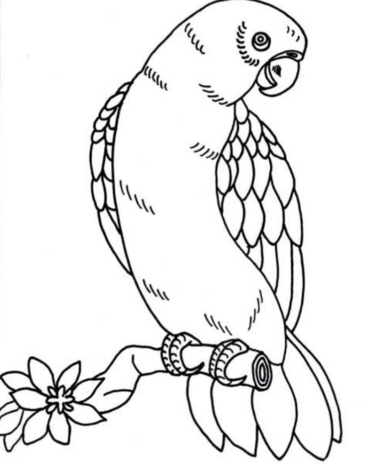 Parrot Coloring Page Di 2020