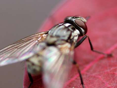 Fly Infestation: 4 Steps To A Fly-Free Homestead | Fly ...
