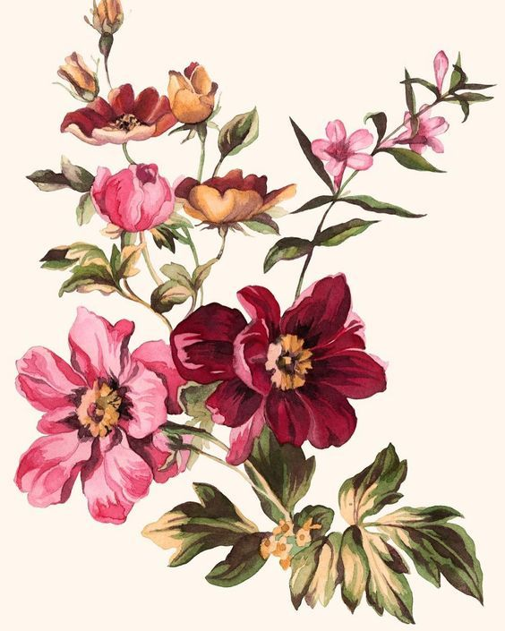 Pin By Ana Maria On Flowers Flower Painting Flower Art Flower Drawing