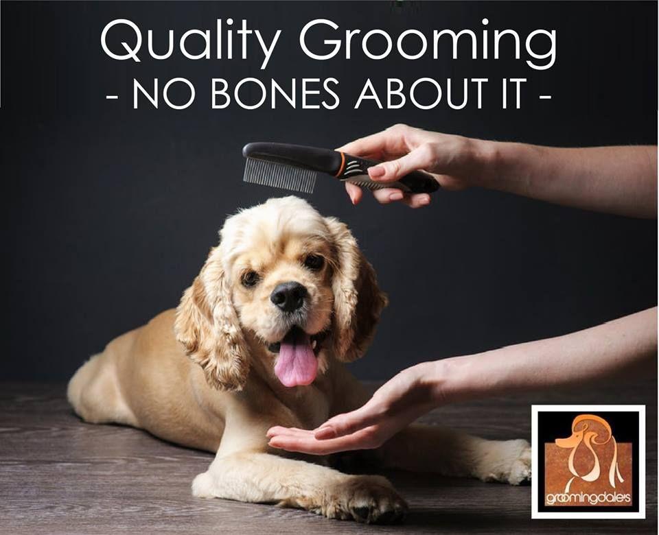 12+ Dog grooming calgary book online information