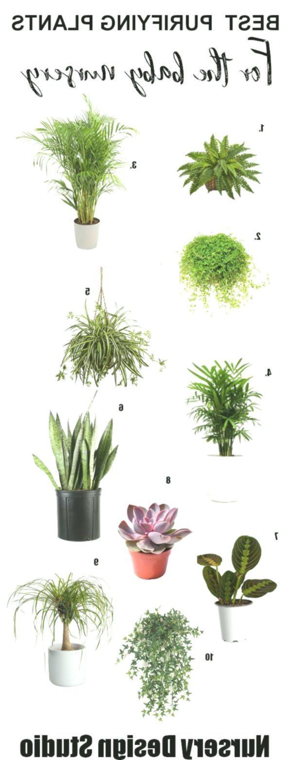 HOUSE PLANTS FOR BABY NURSERY BEST AIR PURIFYING PLANTS #BabyRoom#air #baby #bab...#air #bab #baby #babyroomair #house #nursery #plants #purifying