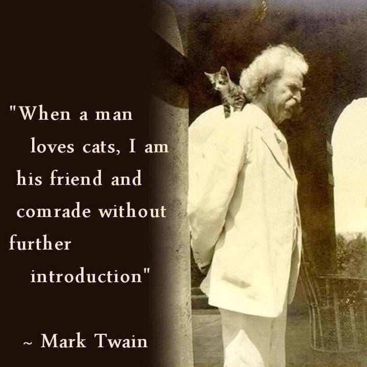 Crazy Cats, Cat Quotes, Mark Twain Quotes