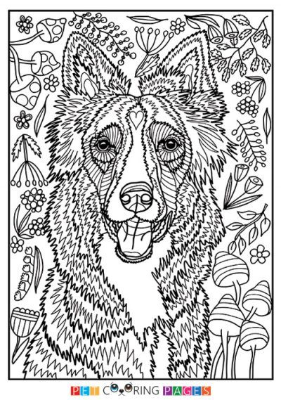 Border Collie Coloring Page Dog Drawing Simple Dog Coloring Page Horse Coloring Pages