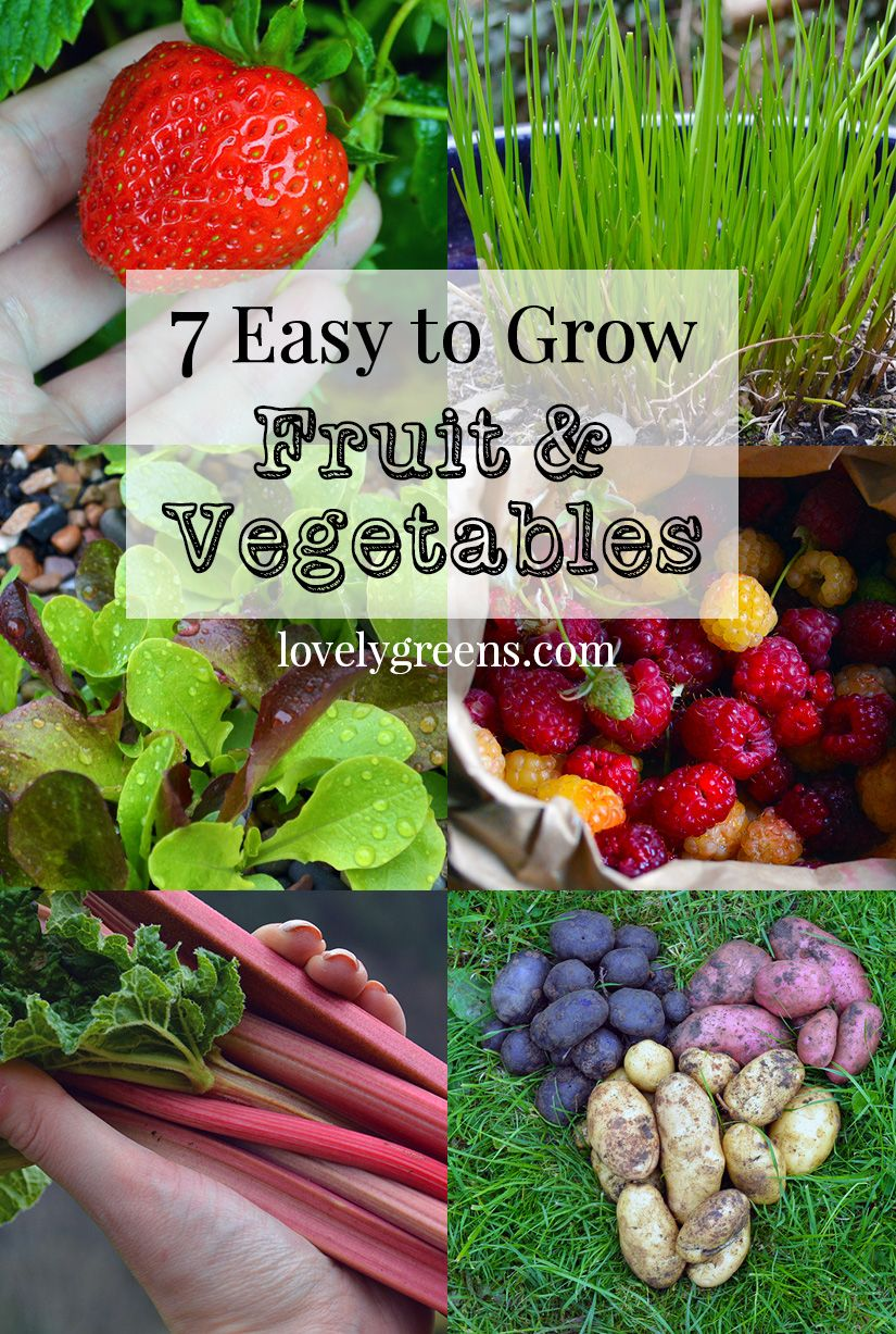 7 Easy To Grow Fruits Vegetables And Tips Get You Started