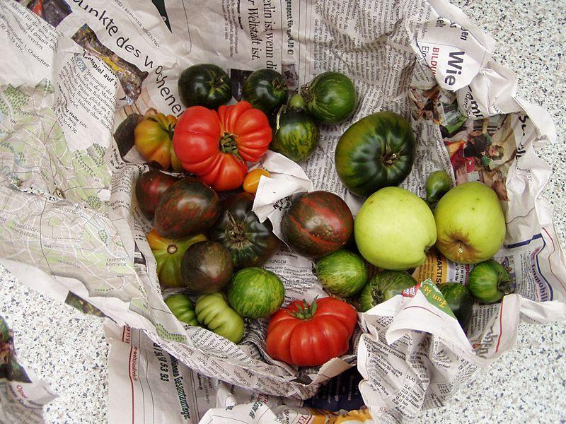Tomaten mit Apfel in Zeitungspapier gewickelt nachreifen. Klappt!