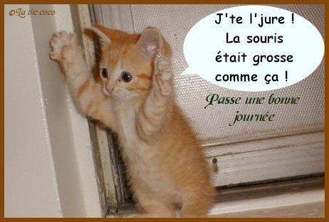 Www Photos A La Con Fr Wp Content Uploads Done 2 Le Premier Chatons De Marseille Jpg Chat Drole Chat Qui Parle Paroles De Chat