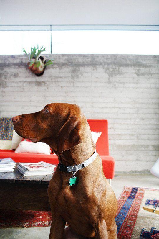 Sam Anne S Colorful Modern Mix Dogs Dog Milk Vizsla Dogs