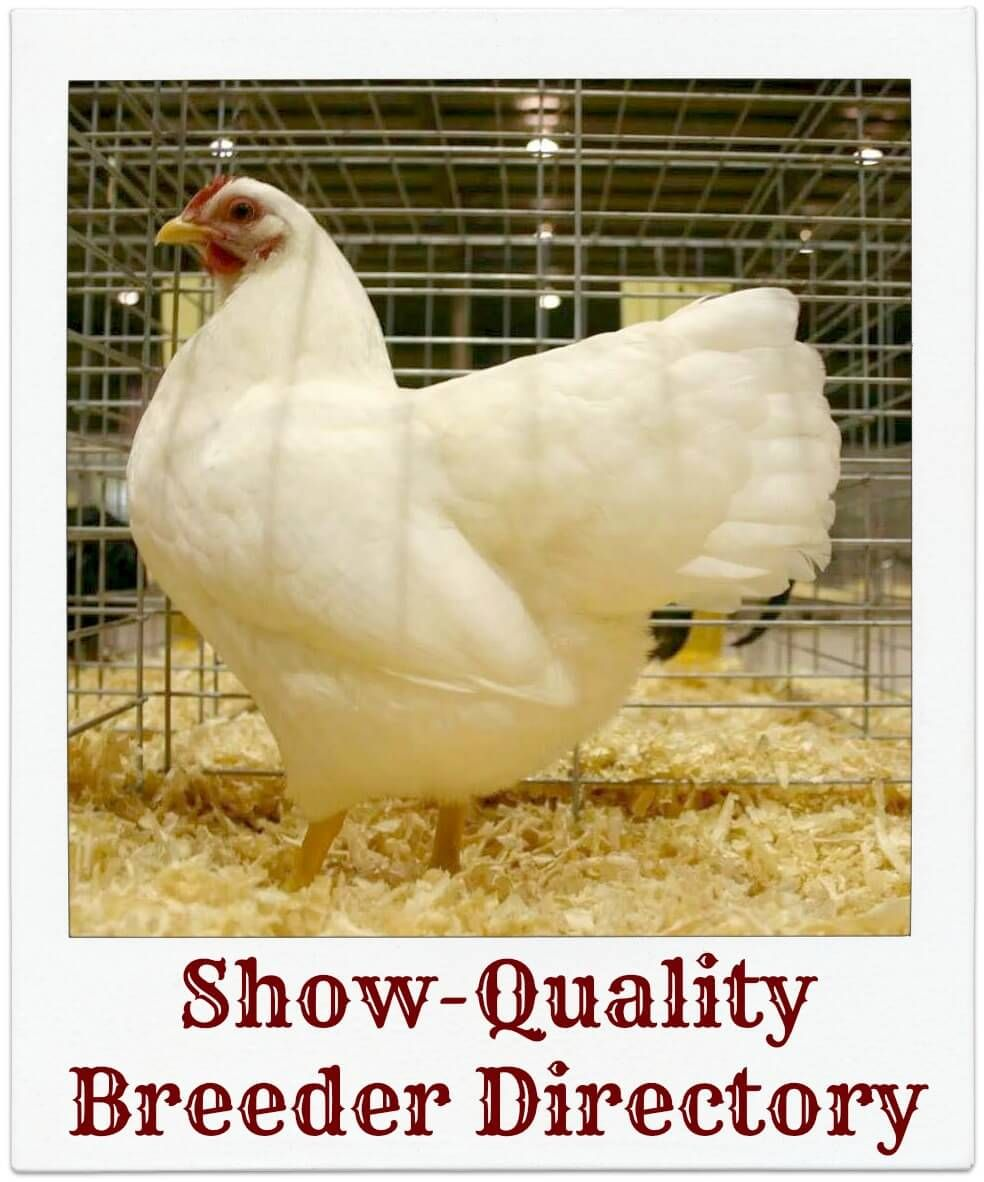 Find the poultry shows and swap meets you are looking for