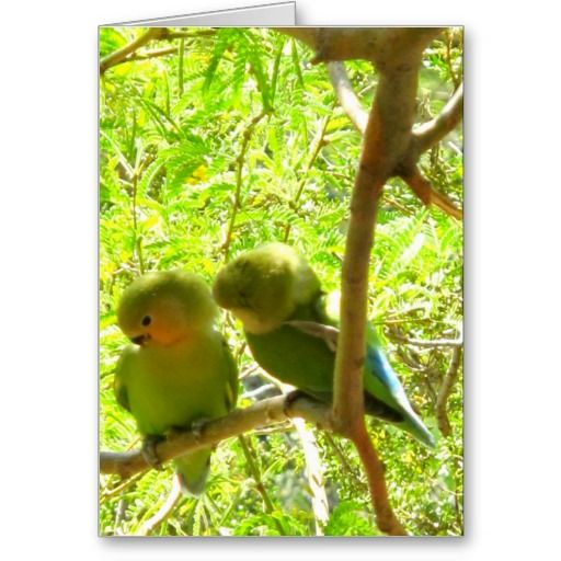 Two Cockatoos in Love Greeting Card
