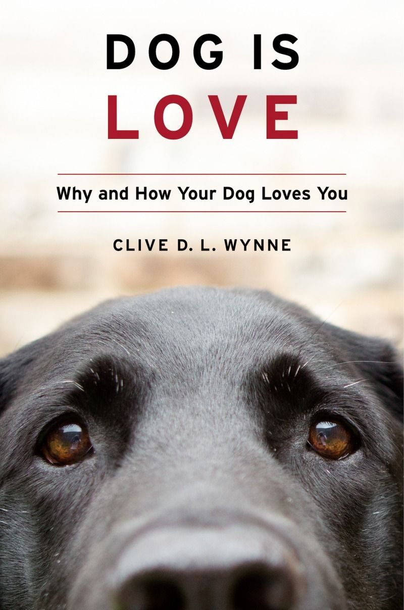 Book Discusses Why And How Your Dog Loves You Dog Love Love You Wynne