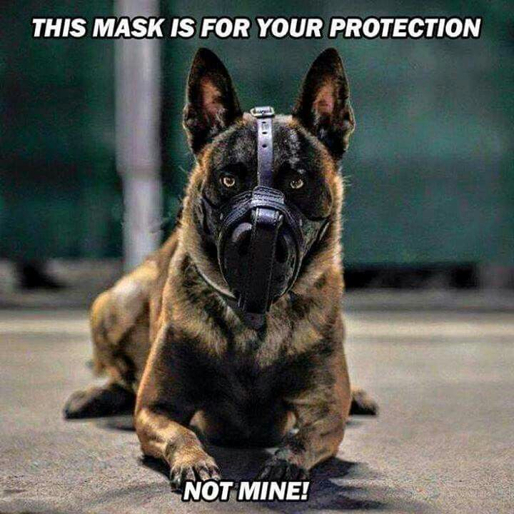 Hannibal Lecter Military Dogs Malinois Dog Military Working Dogs