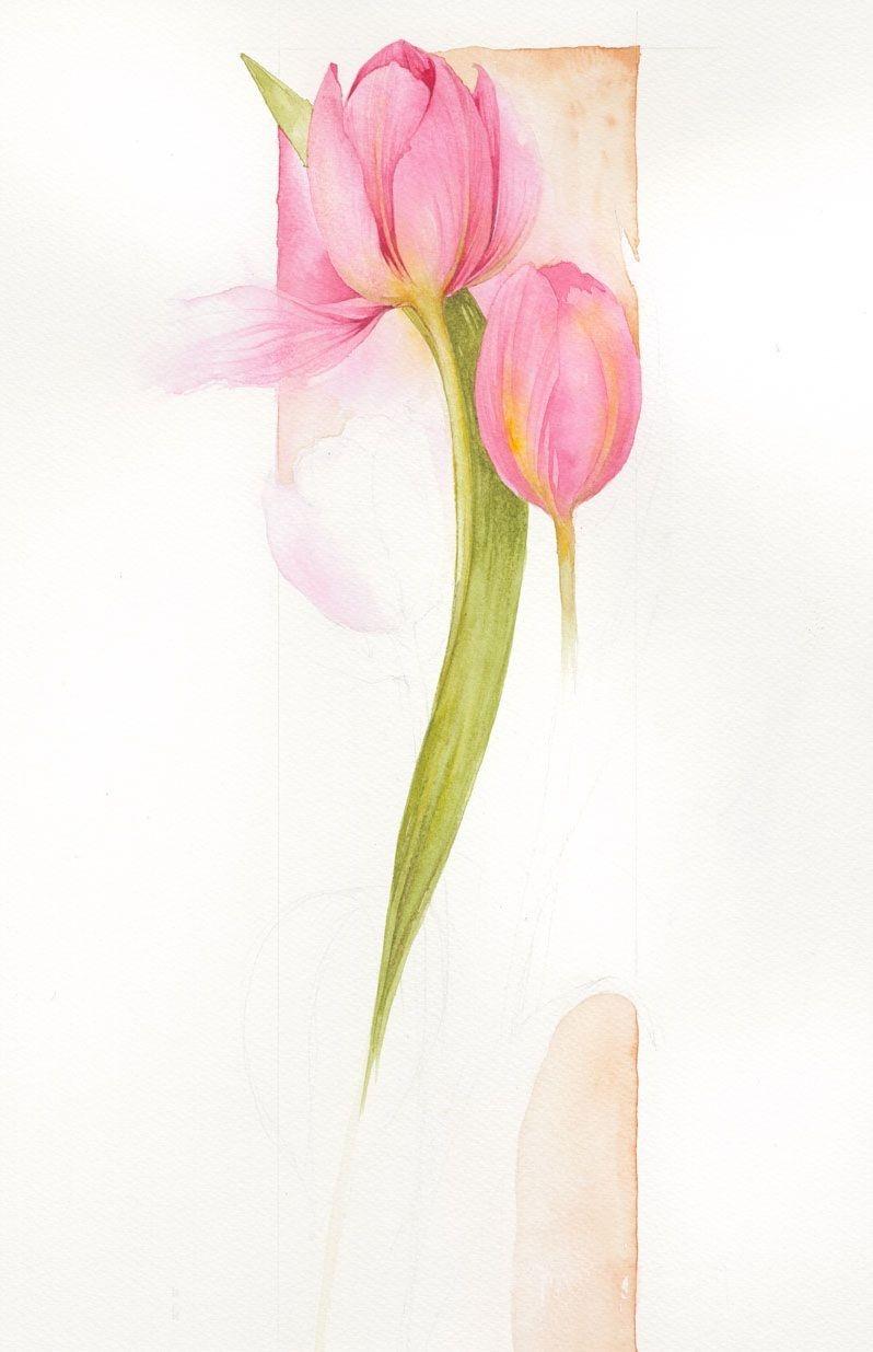 Tulips ~ Jan Harbon