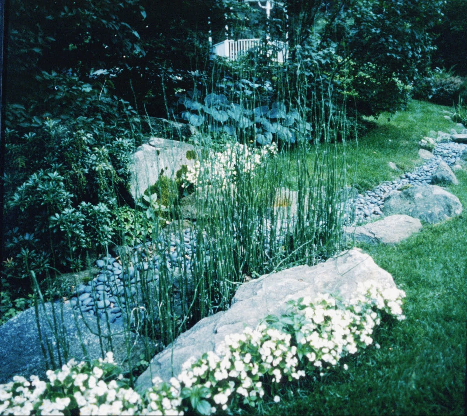 for dry bed | Garden Plant Combinations/Layout | Pinterest ... Planting Design Gardens Dry on planting a garden, drought tolerant landscape design, modern planting design,