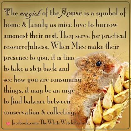 Mouse Mice Spiritual Metaphysical Meaning Totem Animal Witch