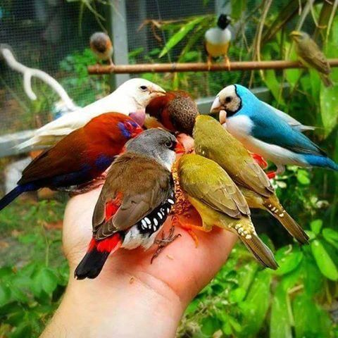 Eating Out Of His Hands Irfan Onat Birds Colorful Birds Beautiful Birds