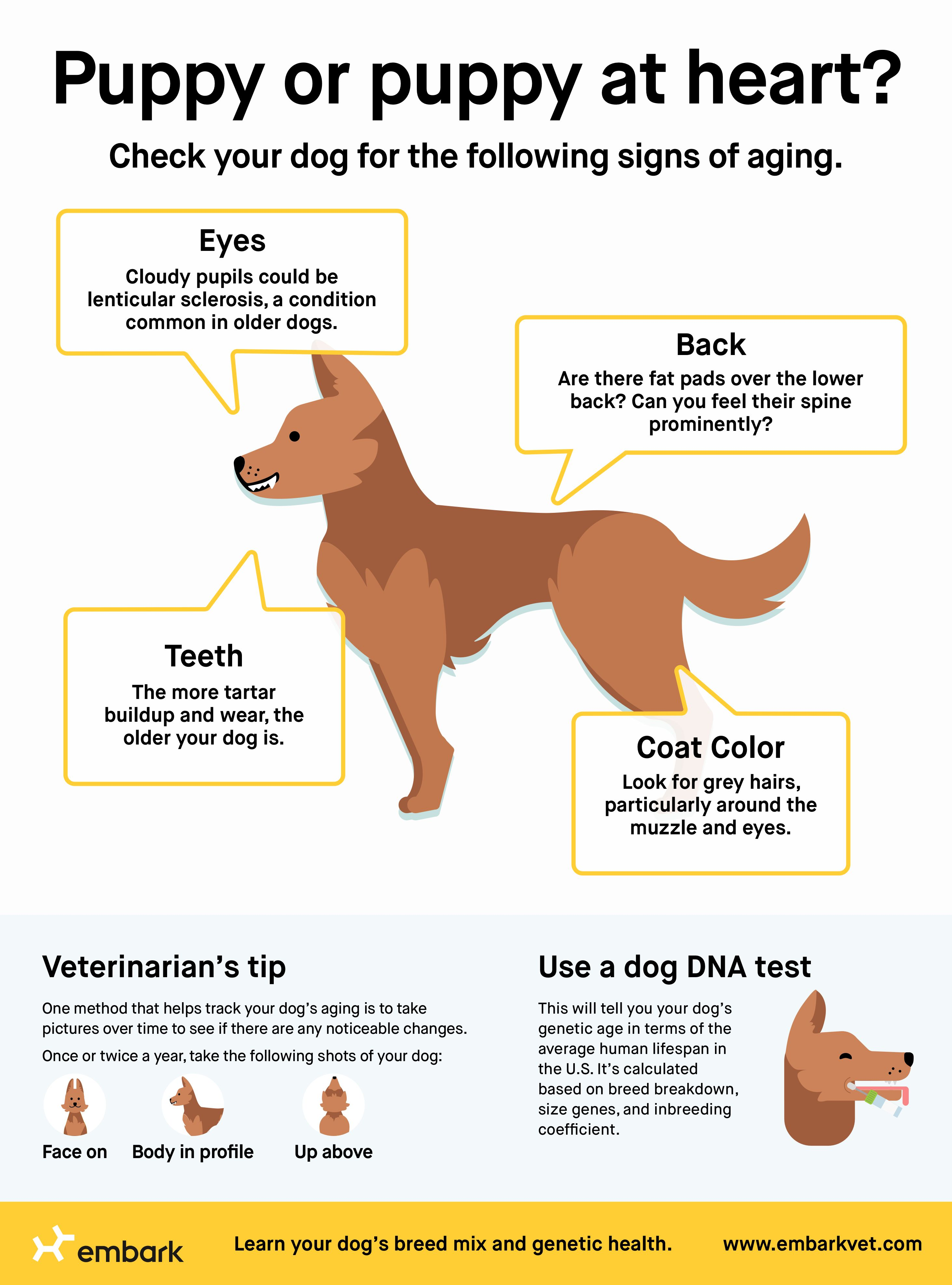 How To Estimate Your Dog S Age In 2020 Dog Ages Dog Dna Test Your Dog