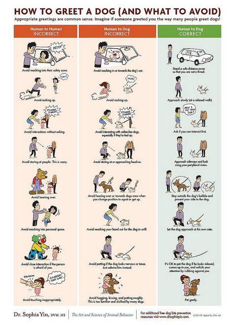 Pictures Of Dog Body Language Dog Body Language Chart Dogs