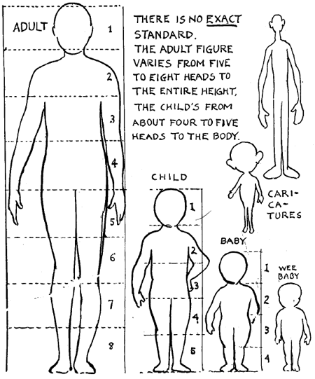 Correct Human Figure Proportions & What is Meant by Out of Proportion. Technically I was taught (in art school) a drawing of an adult figure is generally eight and a half heads high. And when drawing facial features, split the face into thirds horizontally, the top third is the forehead, the middle third is eyebrows to bottom of nose, and bottom third is nose to chin