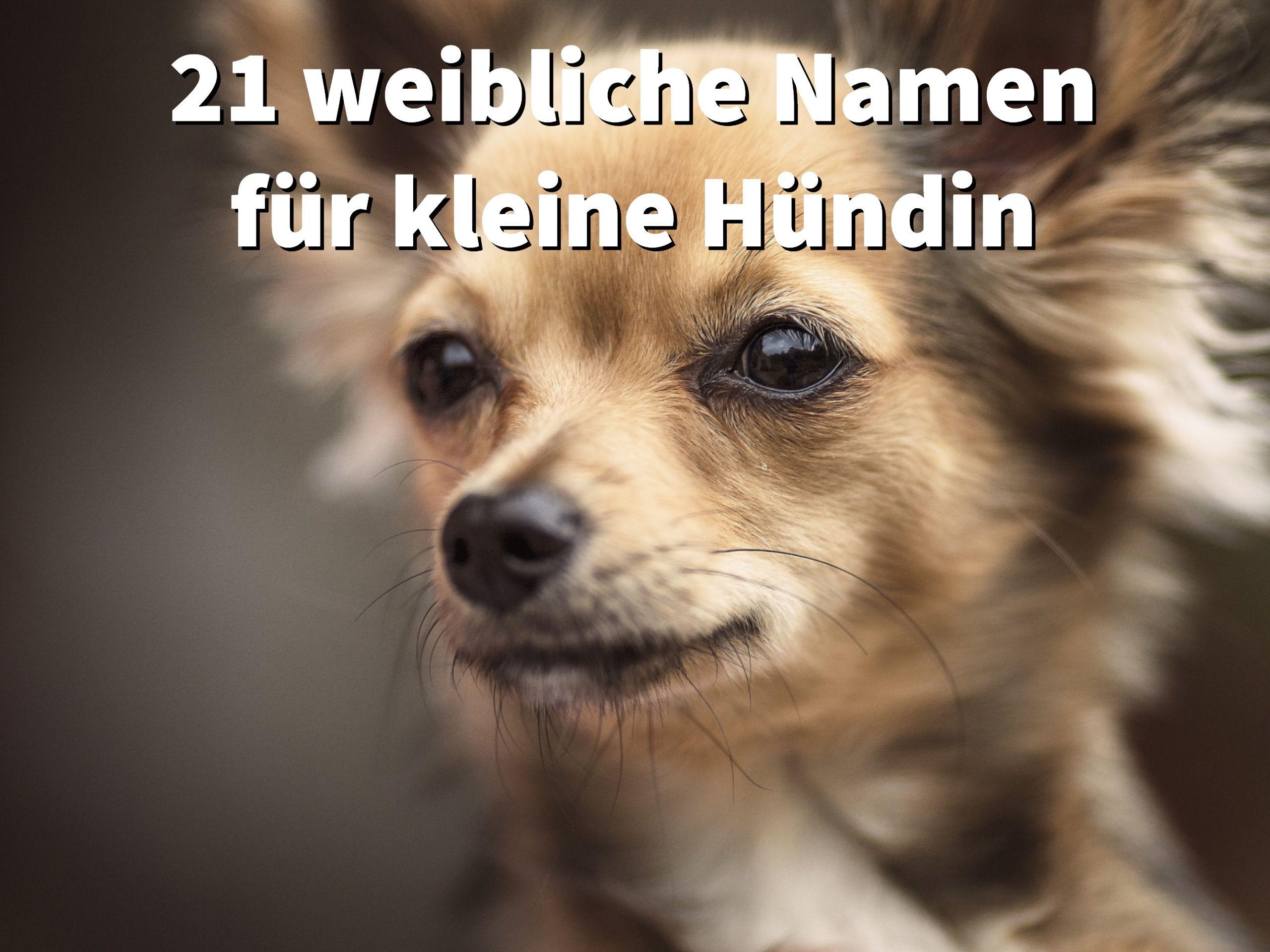 21 Weibliche Hundenamen Fur Kleine Hundinnen Dogco De Weibliche Hundenamen Hundenamen Kleine Hunde