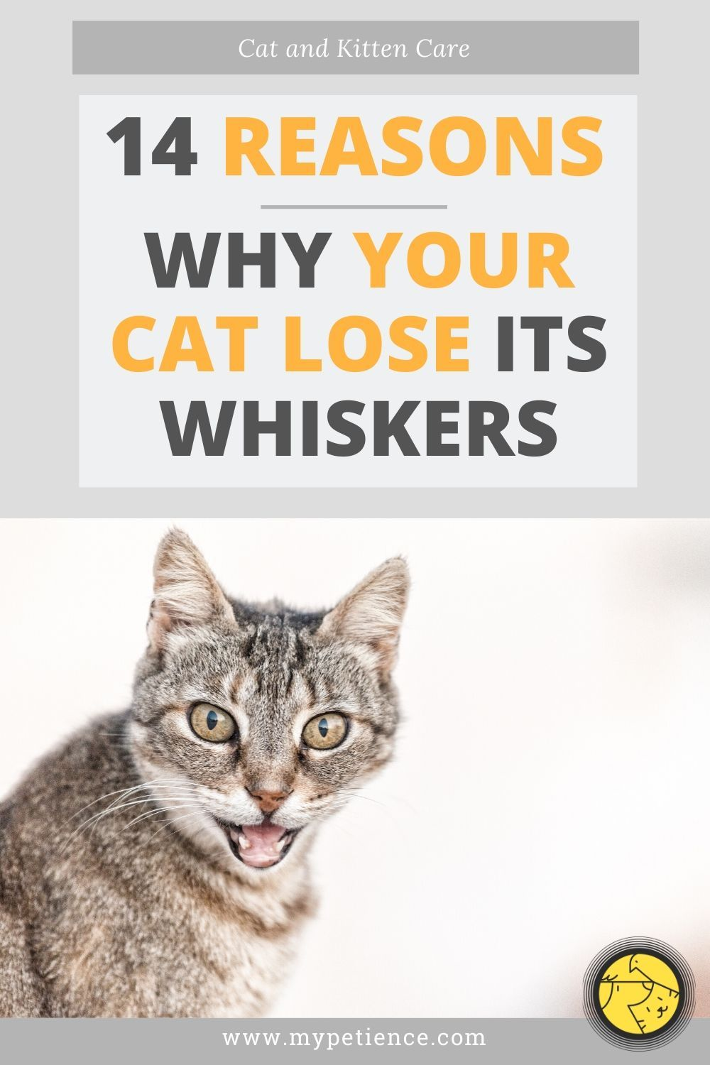Do Cat Whiskers Grow Back? Cat and Kitten Care in 2020
