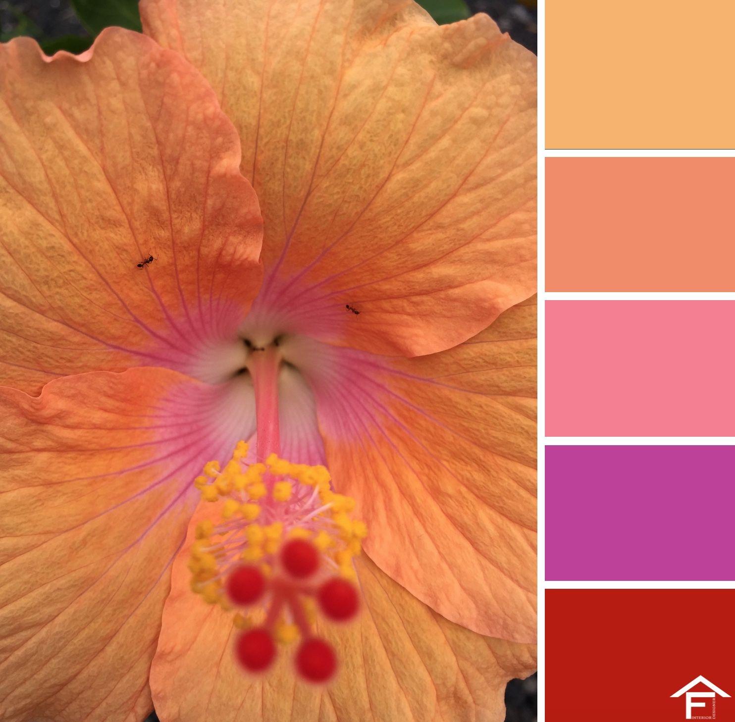 Colour Palettes, Color Palettes, Colour Schemes, Color Pallets