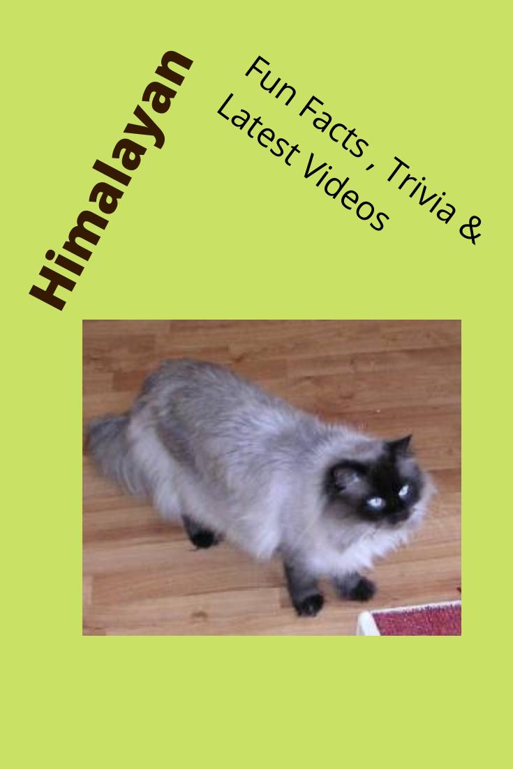 Himalayan Himalayan cat, Siamese cats, Wild cats